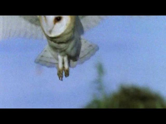 BBC: Жизнь птиц: Искусство летать / 2 серия