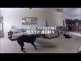 v-home.me - Когда животные одни дома)