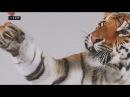 Он ест медведей и носит таинственный знак на лбу Тигр