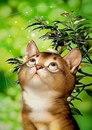 Очаровательные коты от Макото Мурамацу