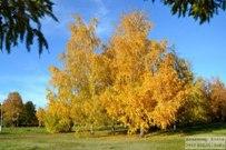 07 октября 2012 - Осень в Тольятти