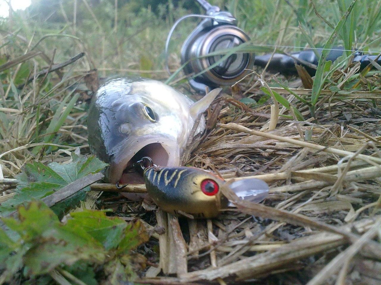 катушка рыболовная купить
