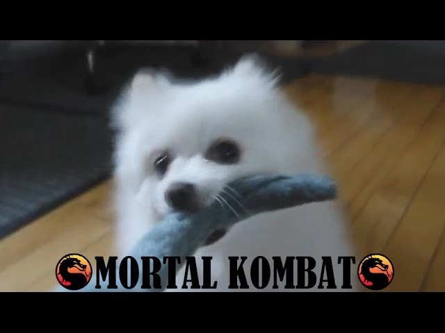 Gabe the Dog - Mortal Kombat