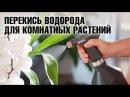 Перекись водорода для цветов. Комнатные растения уход - полезные советы