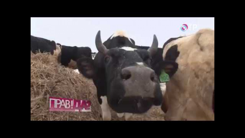 ПРАВ!ДА? на ОТР. Агрохолдинги против фермеров. Кто накормит Россию? (20.12.2016)