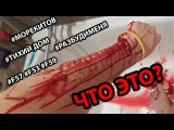 ДЕТИ УБИВАЮТ СЕБЯ ИЗ ЗА ИГРЫ В МОРЕ КИТОВ, F57, F58, ТИХИЙ ДОМ