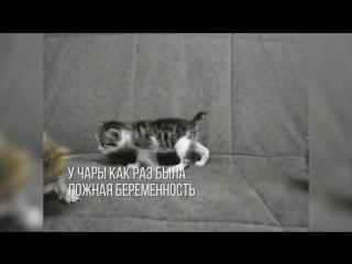 Такса нянчит котят