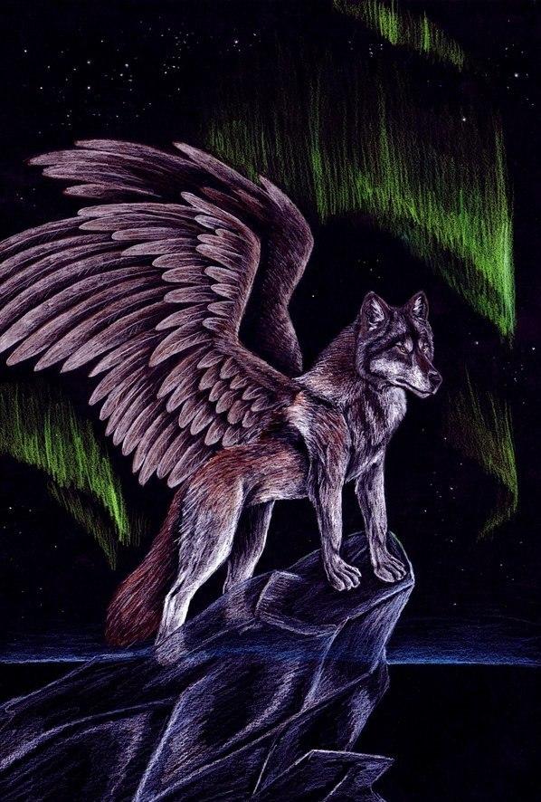 Самуран-крылатый волк Z25oiHROWaE