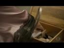 Mocinha furta o conteúdo da caixa misteriosa que Tanaka guarda em seu cofre