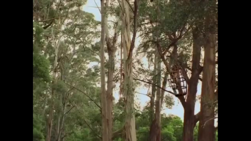 Приключения Синдбада сериал-17
