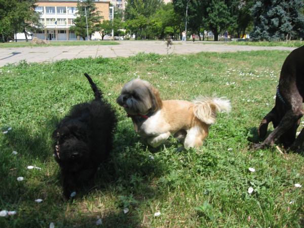Re: щенок цверга из запорожского приюта