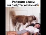 Собака - это единственное существо на земле, которое любит тебя больше, чем себя.👏