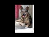 dogs_Gaia