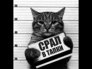 Смешные КОТЫ Лучшие приколы Funny cats compilation Подборка 2