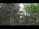 Проливной дождь в лесу. Шум дождя. Звук дождя. Релакс. Медитация. Сон. Для души. Для детей.