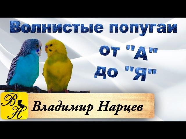 Волнистые попугаи от А до Я ч.2