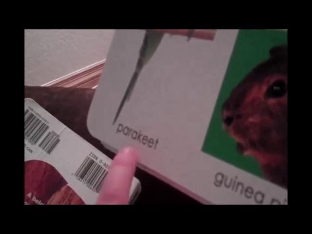 Parakeet смотреть онлайн без регистрации