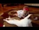 Собачка учит ребёнка ползать