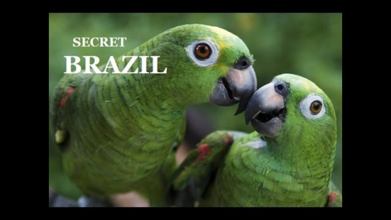 ENG.2.Brazil Wildlife National Geographic Episode 2