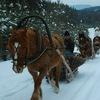Снежный Крака - 5 дней (16.01 -20.01)