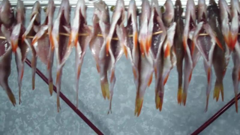 Как сушить рыбу в домашних условиях летом без мух 701