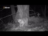 Дикая Америка c Кейси Андерсоном / America The Wild [s02 - 6 из 6] (2011) 1. По следам пумы / Stalking the Mountain Lion