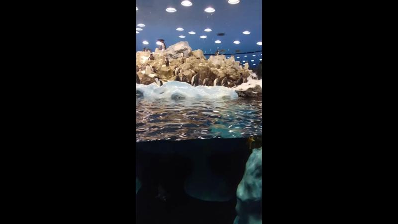 Тенерифе, лоро парк, пингвины
