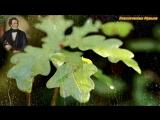 ФРАНЦ ШУБЕРТ - Соната для фортепиано №19 до минор, D.958 - III. Менуэт Аллегро  (Franz Schubert)