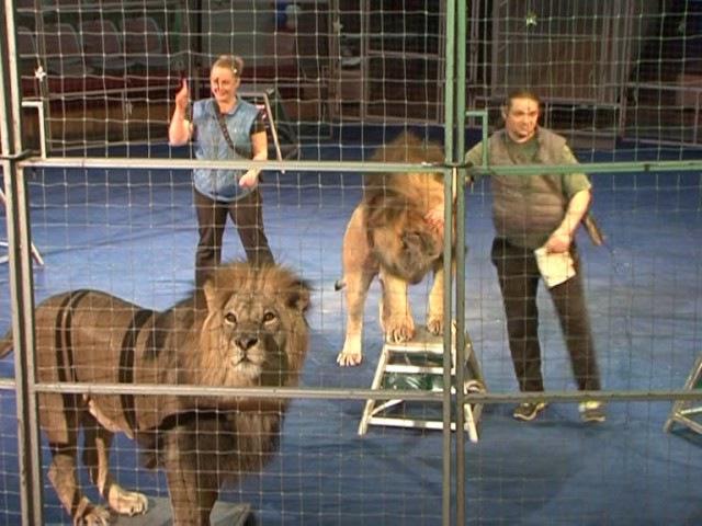 Рекордный трюк. голова в пасть шести разным львам подряд.Алексей Макаренко