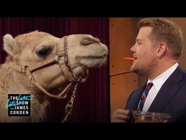 Porcupine Armadillo a Camel w Jack Hanna Lucy Liu Terry Crews