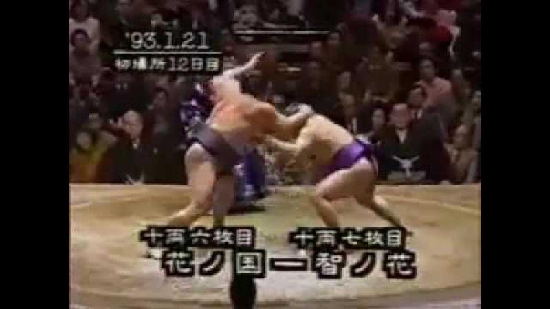 ガチンコ相撲 面白い 😲 Gachinko Sumo