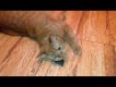 Коты и валерьянка.