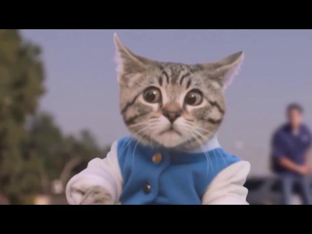 Самые смешные видео про кошки и коты Подборка приколов.ЛУЧШИЕ ПРИКОЛЫ с котами