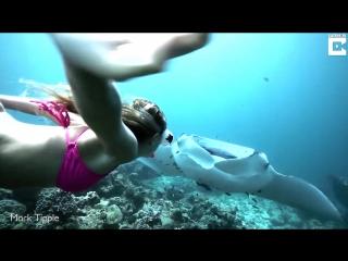 Подводная прогулка с гигантскими скатами