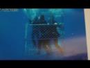 Над глубиной: Хроника выживания (Open Water 3 Cage Dive) (2017) трейлер русский язык HD