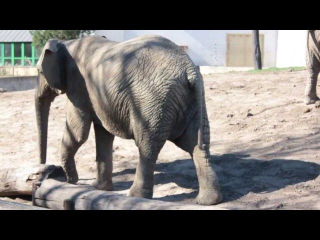 Borys w zoo - filmik edukacyjny dla dzieci ZWIERZĘTA
