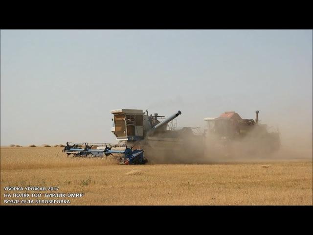 Уборка урожая-2017 на полях ТОО Бирлик Омир возле села Белозеровка (Карасуский район)