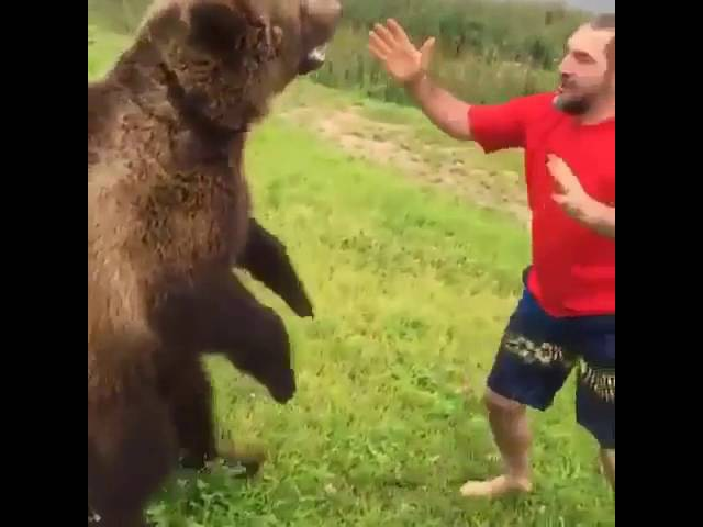 Жесткая Борьба с медведем