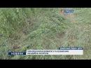 Прикордонники виявили 3 га незаконних насаджень конопель