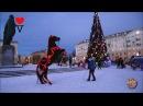 Кони и лошади - величественная красота, грация и мощь. Северодвинск   Funny Horses Videos *SV HD*