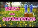 ВИНО ИЗ ОДУВАНЧИКОВ Простой пошаговый рецепт Летичів