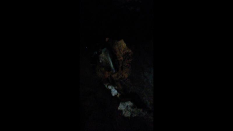 Новоафонская пещера Абхазия И Бах