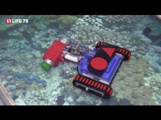 Петербургские лицеисты разработали робота для очистки мирового океана от мусора