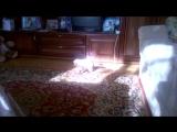Мелисса и её любимый мышонок)