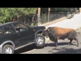 Животные на дорогах! Испания