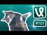 Лучшие ролики сети #101 Вжух!