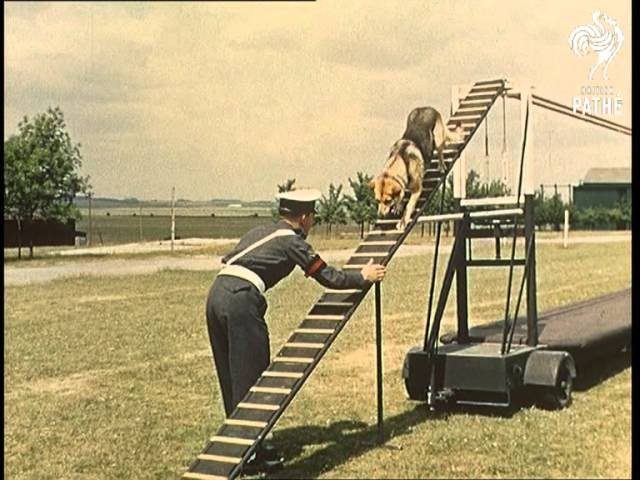 R.A.F. Dogs Aka RAF Dogs Beware - Other Colour Pics Share This Title (1962)