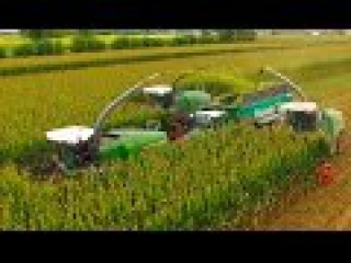 SILAGE XXL: 3x FENDT KATANA, 85 65 - NATURE GREEN | WHEAT and CORN SILAGE in ITALY - Agri957 4K