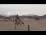 адреналин,пустыня