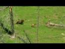 BBC Жизнь млекопитающих Преимущества 6 серия